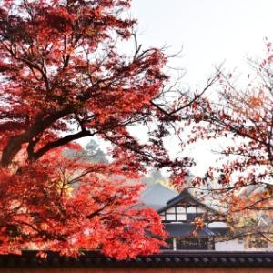 東大寺周辺の紅葉