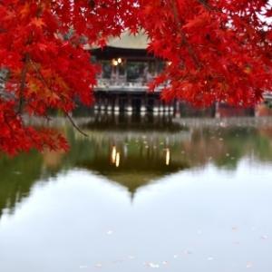 11月27日、雨後・早朝の奈良公園