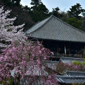 桜の点景2020、東大寺上院周辺