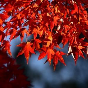 奈良公園・吉城川の紅葉
