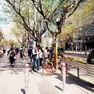 最新・中国上海市場②