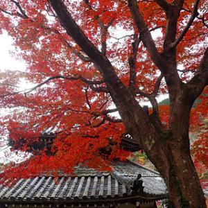 京都西山 善峯寺から大原野神社 紅葉狩りハイキング
