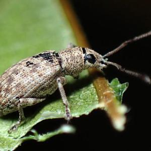 京都西山 自然歩道で昆虫探し2 他の生き物たち