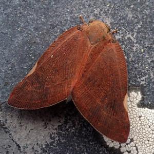 奈良県 法隆寺から矢田寺へ 昆虫達と粘菌