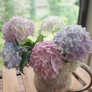 紫陽花とRain
