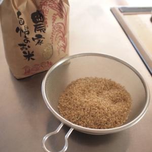 玄米の発芽