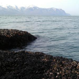 日本海サクラ2回戦不発