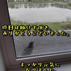 鳥のうん返し