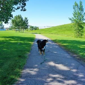 犬を飼うにはお金がかかるよinカナダ