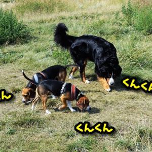 犬友と遊んだ日曜日♪