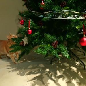 猫様とクリスマスツリー2019