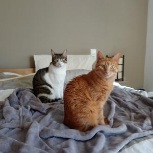 日本行きキャンセルと猫様写真館