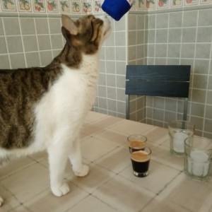 猫様の新しい悪癖と、一家にまた転機が?