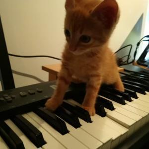 先住猫、「シャー!」の大安売り