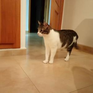 先住猫5歳、新入り猫生後8週、最初の反応