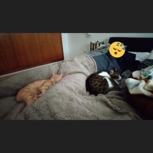 猫様とシエスタしてチュロスを食す、そんな日曜日