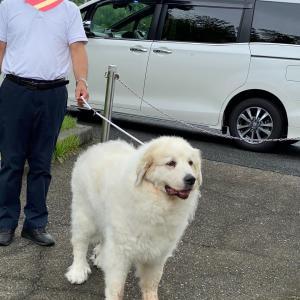 熊本南部豪雨の中、鹿児島からゴン太を連れてきた!