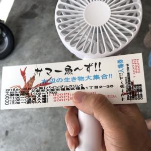 サマー魚〜ず! 大阪に来た。