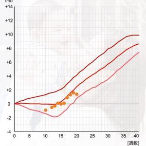 20週妊婦健診☆卵管結紮する?