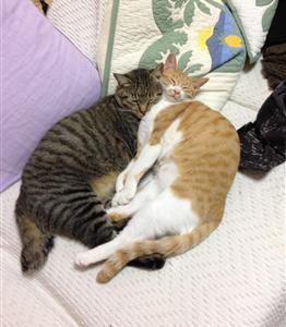 おれの飼い猫に可愛さで勝てる猫っているん?