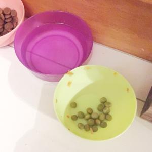 ビフォーアフター ☆ 愛犬のお皿
