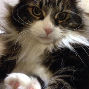 まだまだ可愛い( ´ ▽ ` )ノ 我が家の猫