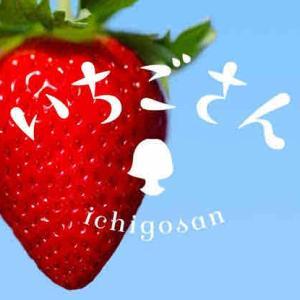 【いちご苗盗難】佐賀のイチゴ新品種「いちごさん」の苗、盗難相次ぐ 農家困惑「何のため?」
