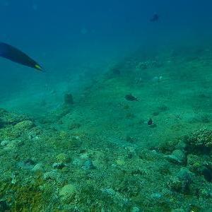 沈んだ海洋フロートは魚たちの住み場 その1