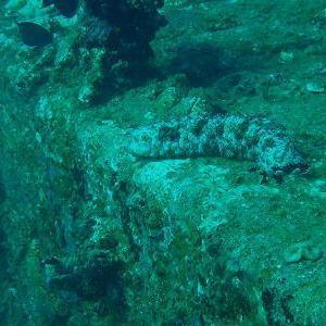 沈んだ海洋フロートは魚たちの住み場 その2