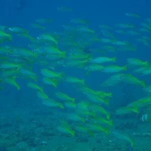たくさんの魚影