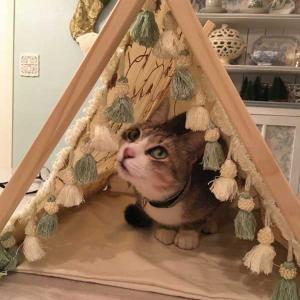 猫用テントを作った