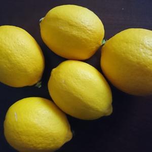 七草粥の日とレモン収穫