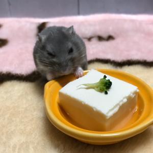 食べ切れない豆腐
