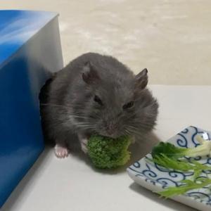 ブロッコリーが大好き