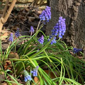 冬眠、目覚め、そして春