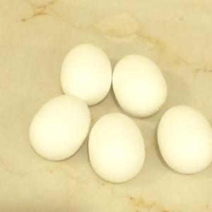 うさ子の卵の行方♡