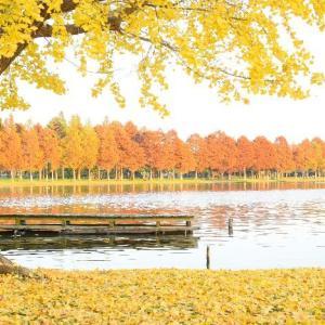 愛犬の Birthday♡ 水元公園の紅葉・カワセミ
