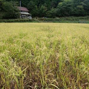 792_里山ひよじ村の稲刈りに参加してきた201003