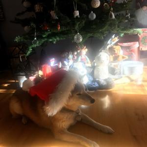 *毛糸も北欧もアンティークも、Happy Merry Christmas 2019*