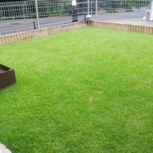 芝生の管理「今期12回目の芝刈りと殺虫剤」