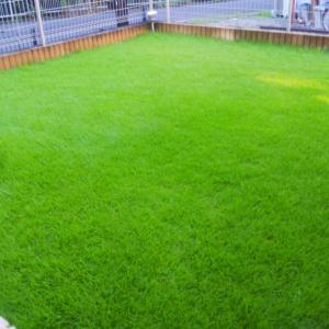 芝生の管理「約ひと月放置」