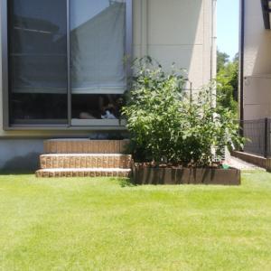 芝生の管理「今期8回目の芝刈り」