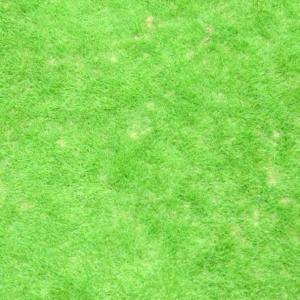 芝生の管理「今期10回目の芝刈り」
