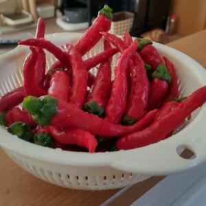 【白菜】土作り