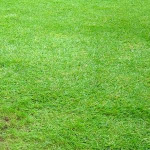芝生の管理「今期11回目の芝刈り」