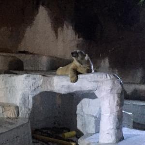 初 knight zoo