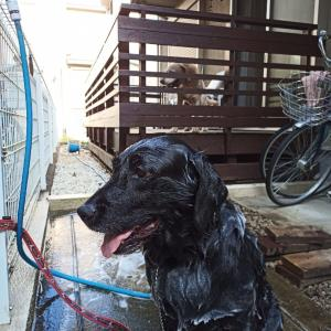 犬洗い日和♪