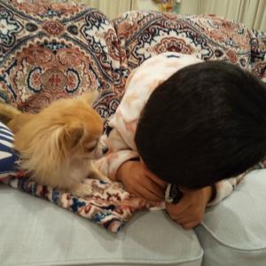 [息子6歳0カ月]犬の輸出手続きが難しい☆息子の初財布