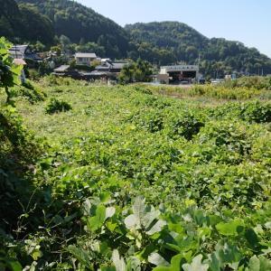 大阪自然栽培農学校の目的は