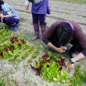 虫喰い野菜の意義